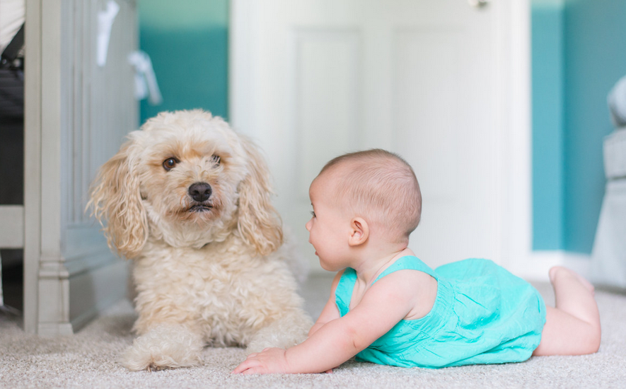 婴幼儿早教课程有哪些 给宝宝早教的时候需要注意什么